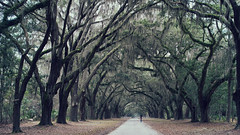Wormsloe Historic Site. (Explored) (Linh H. Nguyen) Tags: travel trees nature moss oak landmark historic spanish plantation savannah avenue cinematic magical wormsloe explored nex7