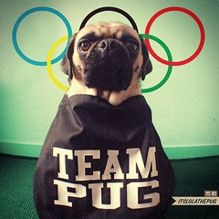 Theres only one team I cheer for at the Winter-Olympics in Sochi For which country do you cheer? (brat_ro) Tags: dog chien pet cute animal cane puppy square fun tiere pug hund squareformat pugs mops carlino iphoneography instagramapp uploaded:by=instagram