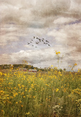 Wishful Thinking (forestbear1) Tags: sky texture clouds 1st prairie grasslands yellowconeflowers {vision}:{text}=0543 {vision}:{sky}=0718 {vision}:{outdoor}=0533