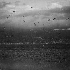 Yesterday is blowing back (Victoria Yarlikova) Tags: old bw italy seascape beach monochrome birds composition vintage square moody strait