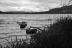 DSC_4511 [ps] - A Long Walk (Anyhoo) Tags: uk lake water stone reeds scotland rocks stones ripple horizon wave shore steppingstones loch rushes distant ithink lochard anyhoo photobyanyhoo