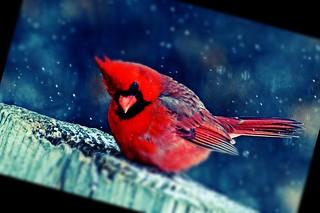 #CrazyCamera bird