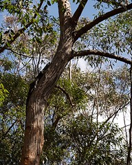 Lace Monitor (Goanna) (John Panneman Photography (AcePanno)) Tags: monitor lace goanna lizard nsw australia shoalhaven panneman nikon d610