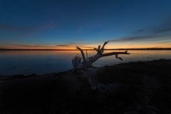 Blue Dawn (mclcbooks) Tags: landscape lakescape seascape lake water reflections sunrise dawn daybreak lakechatfield colorado driftwood silhouette log tree beach bluehour