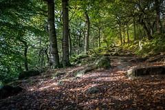 Padley Gorge (jacky.rodgers) Tags: wood woodland autumn derbyshire padley gorge river trees leaves rocks