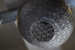 DSC00558 (gabriella.lavati) Tags: sony sonyalpha carl zeiss rollei germanyversion planar 50mmf18 hungary budapest smuzviragneked bokehdream cateyebokeh bokeh zeissbokeh