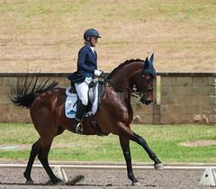 161023_Aust_D_Champs_Sun_Med_4.2_6250.jpg (FranzVenhaus) Tags: athletes dressage australia siec equestrian riders horses performance event competition nsw sydney aus