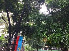 (adlaw) Tags: mango jackfruit