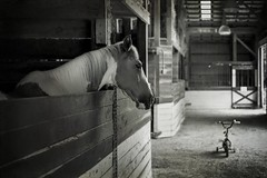 (chalkdog) Tags: horse stable tricycle greensfelderstables