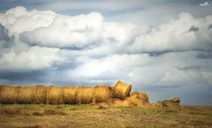 Polish harvest (VandenBerge Photography) Tags: harvest panorama poland europe travel season westpommern weather clouds sky skyscape landscape trzciskozdrj canon nature nationalgeographic lonelyplanet