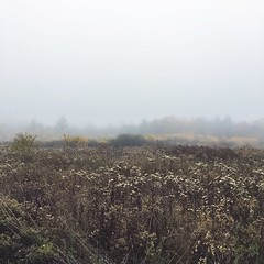 (amy higgins) Tags: iphone evening fog landscape autumn fall