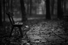 Autumn (♫♪♭Enricodot ♫♪♭) Tags: enricodot bw bn bench street autumn garden canon ilobsterit