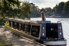 Waiting For Daddy 23_31 (John Penberthy LRPS) Tags: johnpenberthy nikon d750 dog thames riverthames kingstonuponthames barge waiting 2331 photoadayforamonth october outdoors