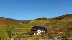Autumnal Vineyards (lstr  clonn) Tags: rotweinwanderweg mayschos ahrtal wine wein vineyard weinberg germany rhineland autumn fall herbst