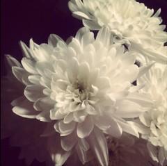 wedding_flowers (jendickinson96) Tags: flowers closeup