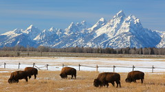 IMG_5069 Elk Ranch Flats, Grand Teton National Park (ThorsHammer94539) Tags: grandtetonnationalpark