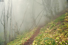 20 Dry Mountain Fog (kana movana) Tags: dry mountain serbia balkan forest tree fog foggy weather fall autumn mountaineering walk tracking nature outdoor travel journey climbing d90