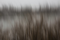 finnish landscape (sami kuosmanen) Tags: long exposure nature north europe expression photography puu pitk valotus valo mets maisema tree puut finland forest suomi sky syksy winter taivas talvi snow luonto light landscape lumi intentionalcameramovement icm