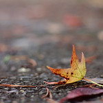 Leaves With Fake Velvia thumbnail