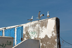 Trio, Essaouira, Morocco (Abhi_arch2001) Tags: three trio seagull bird blue door white wall sky dance morocco moroccan essaouira port musketeers friends