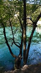 Παρκο Κροατιας P1240381 (omirou56) Tags: παρκοκροατιασ φυση δεντρο 169ratio panasoniclumixdmctz40 tree parkofcroatia outdoor