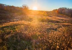 November (patkelley3) Tags: autumn sunset gold field november