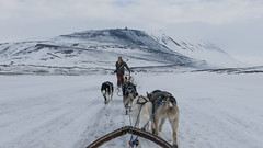 Dog sledding in Svalbard (Nick T Kelly) Tags: winter snow cold norway spitsbergen svalbard husky racing dog sledding