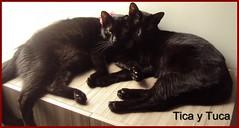 tica tuca (terryisaza) Tags: amor animales felinos fotografia gatos gata cachorros ecologia cariosos cats