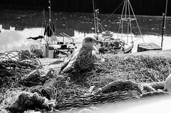 Torquay (Rob.Rutley) Tags: torquay canon canon5dmkii seaside kents caverns fishing nets traps seahuts