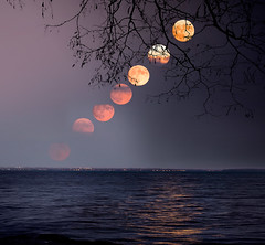 supermoon rising over St.Lawrence river (marianna_a.) Tags: supermoon full moon rising composite montreal stlawrence river light night sunset mariannaarmata quebec canada f64g79r5win