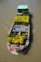 Boats on the Mekong river in southern Vietnam (phuong.sg@gmail.com) Tags: agriculture asia asian boat cantho classic culture delta destination east floating fruit indochina life lifestyle local market mekong merchant oar occupation people poor retail river rowing selling ship south southern standing tour tourism tourist traditional transportation travel trip tropical vendor vietnam vietnamese village water woman wood