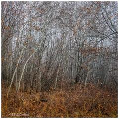 _BW74135-Aspen (Bruce Walter) Tags: aspen fall earthy surreal