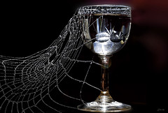 (kunstschieter) Tags: palinka glass web stitched