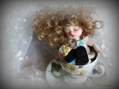 Une Goutte de Bonheur...A Drop of Happiness (maiptitfleur) Tags: poupe doll bjd rve dormir tasse cup dodo sleeping puppen darak jouet toy
