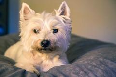 IMG_3584.jpg (funkgasm) Tags: beanbag dog furniture joshgifford seattle