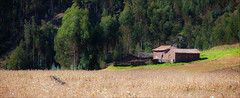 Andean Farmhouse (kate willmer) Tags: house trees field corn green altiplano peru landscape
