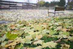 A ras de otoo (Anvica) Tags: otoo autumn hojas leaves banco bench parque park fuji x100