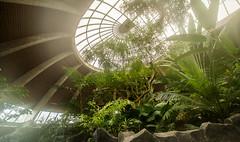 the rainforest. (Maicdlphin) Tags: