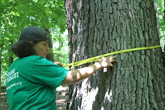 Young Naturalists taking diameter at breast height (pghparks) Tags: alb youngnaturalists