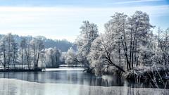 frozen wonderland (Florian Grundstein) Tags: winter landscape saltendorf teublitz weiher see lake water trees nature frozen cold icy nikon fx fullframe nikkor