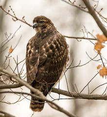 LB 12-6-16-320.jpg (Andy-Anderson) Tags: loantakabrook newjersey fall outdoors nature autumn nj