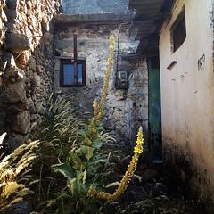 Τα χρώματα του χρονου #timescolors #crete #mesalasithi #lasithi #lasithiplateau