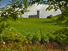 Potatoes in the Church field (Alan10eden) Tags: light green church nature field leaves canon potatoes farm hill sigma potato rows crop northernireland farmer framing spuds crossroads 1770 ulster drills arable tillage countyarmagh 60d drumsallen haulms