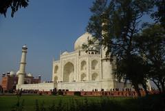 Taj Mahal and tree