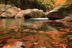 Midnight's swirl (MarcusDC) Tags: water leaves waterfall fallcolor boulder waterfalls bigcreek greatsmokymountainsnationalpark northcarolinawaterfalls