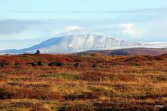 Aaldalur og Hsavkurfjall (Freyja H.) Tags: autumn plant fall nature grass landscape lava iceland moss outdoor blueberry birch haust fallcolours aaldalur hsavkurfjall