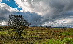 Northumberland. (Callaghan69) Tags: uk england storm tree nature clouds landscape countryside nikon scenery day cloudy country scenic hills northumberland nikkor rothbury cokin ndfilters northeastengland northumbrian d7100 gndfilters wildaboutnorthumberland
