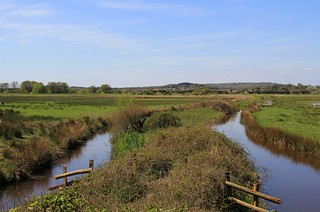 Pulborough Brooks RSPB West Sussex (9)