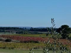 C'est le Sud (brigeham34) Tags: france automne novembre rando eu paysage vignes languedocroussillon hérault montagnac fz45 sentierdebessilles parvignesgarriguesetpinèdes