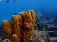 PA290833 (..Gratefulhume..) Tags: ocean sea vacation beach nature water island mar paradise underwater atlantic tropical barbados caribbean aquatic westindies